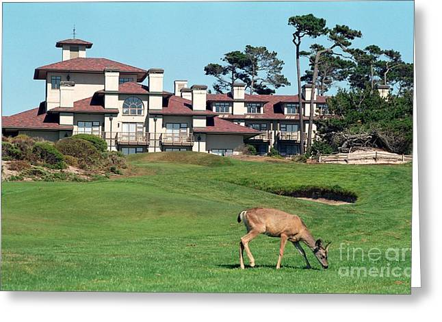 Deer At Spanish Bay Greeting Card