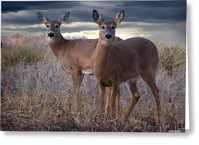 Deer Brothers Greeting Card
