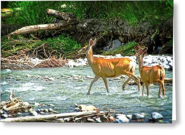 Deer Crossing Greeting Card by Cheryl Cencich