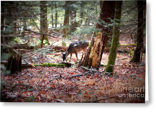 Deer Grazing Around The Loop Cades Cove Greeting Card