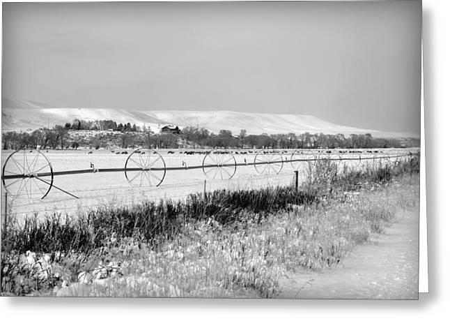 Deer Herd In Winter Greeting Card by Lisa Holland-Gillem