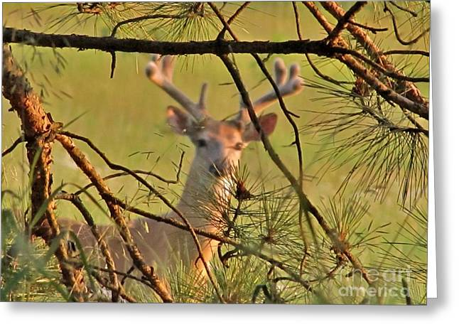 Deer Hunters' Fantasy Greeting Card by Marilyn Smith