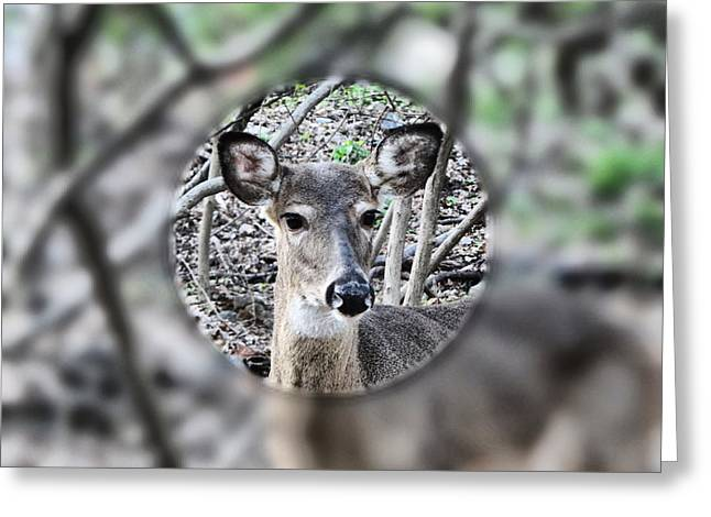 Deer Hunter's View Greeting Card