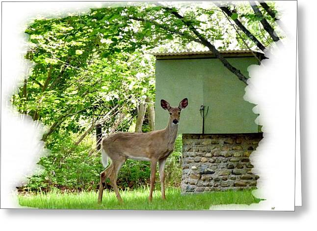 Deer In A Hazelnut Grove Greeting Card by Will Borden