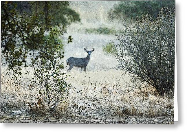 Greeting Card featuring the photograph Deer In A Meadow by Sherri Meyer