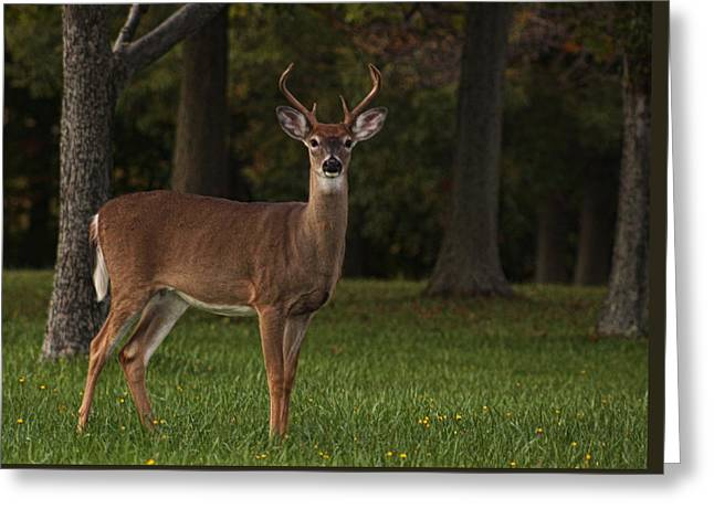 Greeting Card featuring the photograph Deer In Headlight Look by Tammy Espino