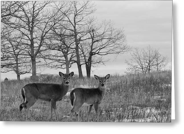 Deer In Meadow Greeting Card