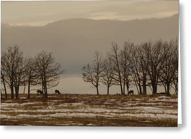 Deer In The Meadows Greeting Card