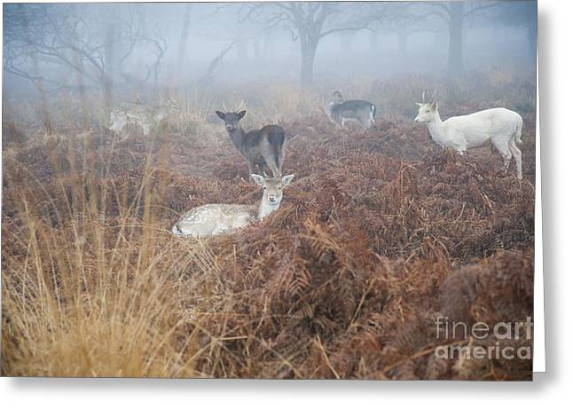 Deer In The Mist Greeting Card by Donald Davis