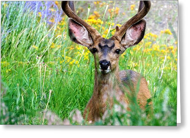 Deer In Wild Flowers  Greeting Card by Art Harrigan