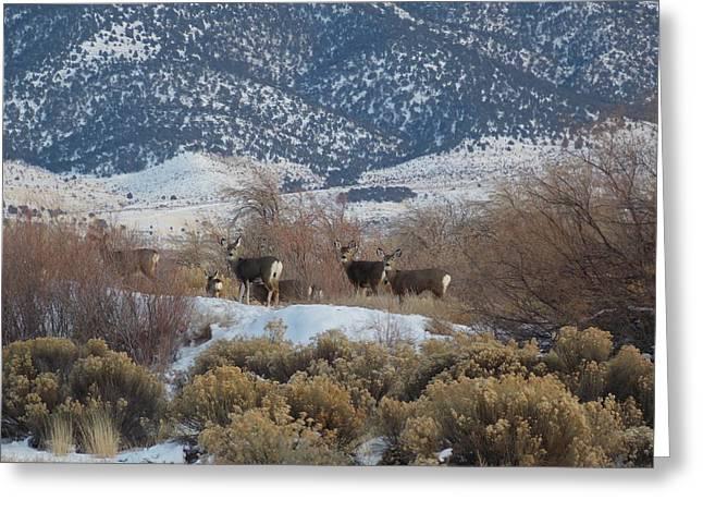 Deer In Winter Greeting Card