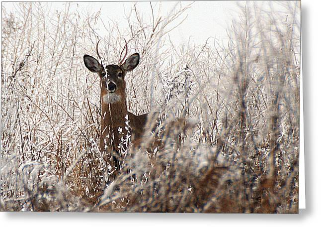 Deer In Winter Greeting Card