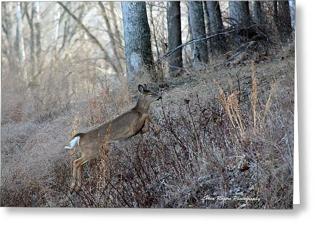Deer Moving Upward Greeting Card by Lorna Rogers Photography
