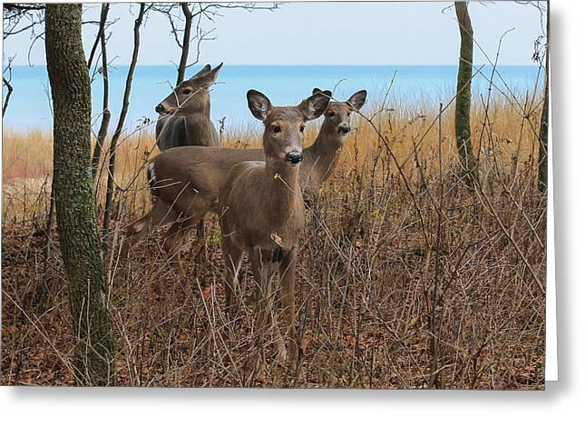 Deer On The Beach Greeting Card by Anna-Lee Cappaert