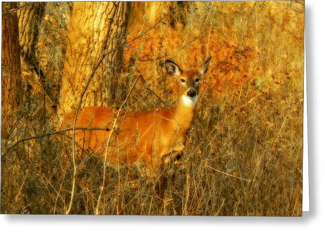 Deer Spotted In A Golden Glowing Field  Greeting Card