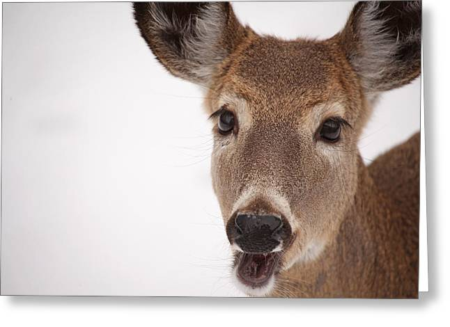 Deer Talk Greeting Card by Karol Livote