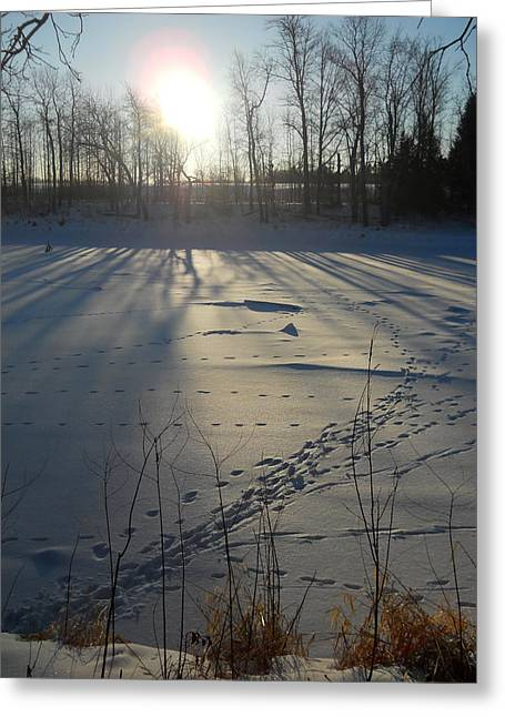 Deer Tracks On The River Greeting Card