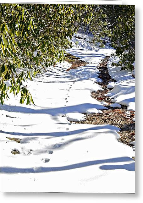 Deer Trail Greeting Card by Susan Leggett