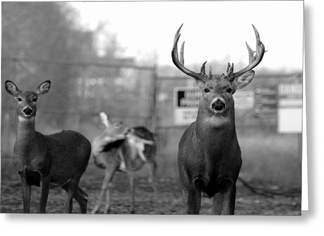 Deer Trio Greeting Card