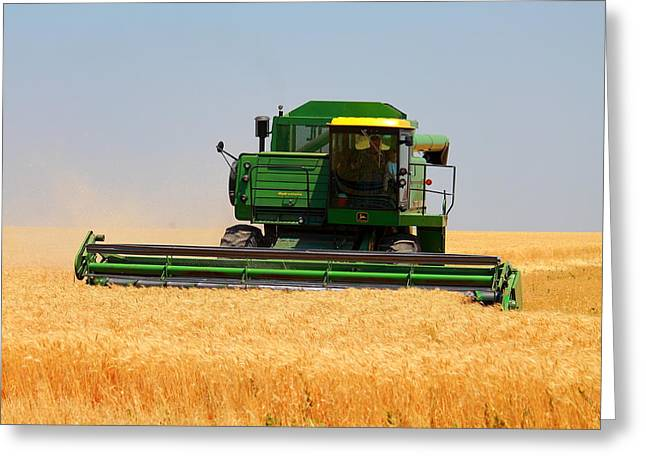 Deere Field Greeting Card by Jason Drake