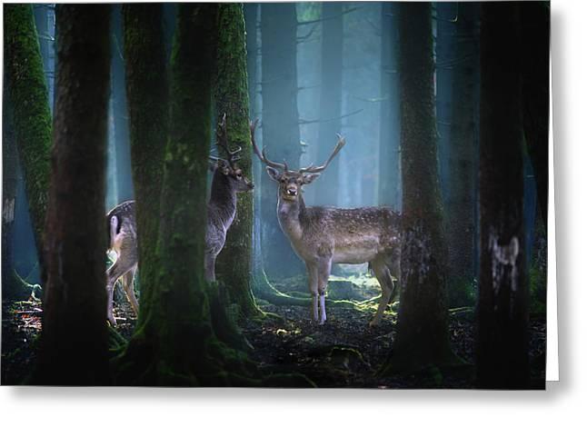 Deers Greeting Card by Patrick Aurednik