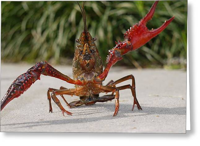 Defiant Crawfish Greeting Card