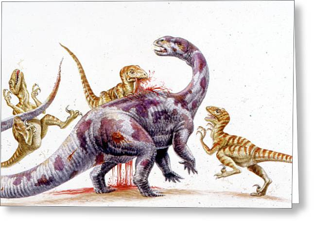 Deinonychus Attacking Tenontosaurus Greeting Card by Deagostini/uig
