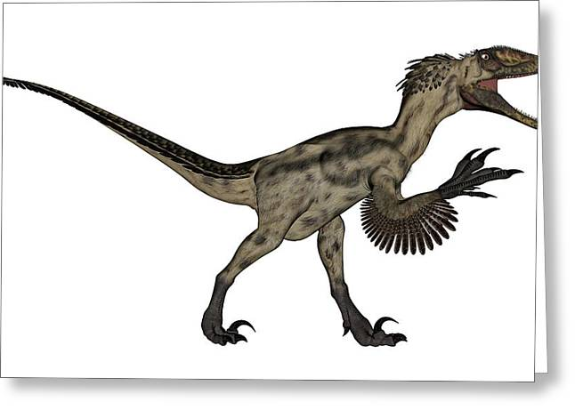 Deinonychus Dinosaur Isolated On White Greeting Card by Elena Duvernay