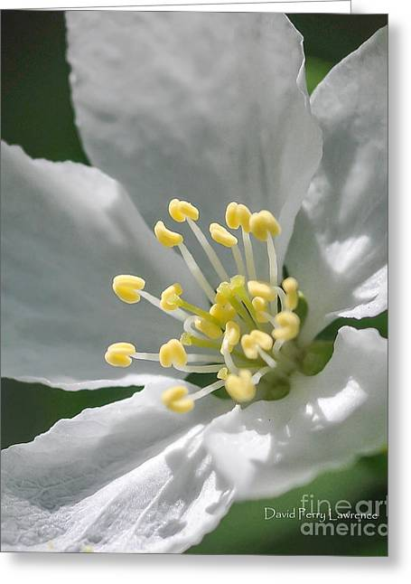 Delcate Widflower With Beautiful Stamen Greeting Card