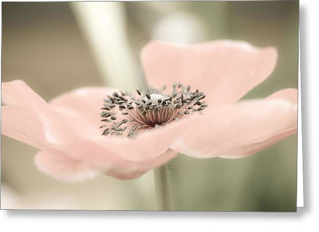 Delicate Anemone Greeting Card by Julie Palencia