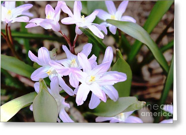 Greeting Card featuring the photograph Delicate Beauty by Judy Palkimas
