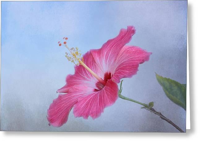 Delicate Beauty Greeting Card by Kim Hojnacki