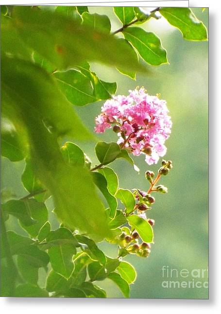 Delicate Blossom Greeting Card by Audrey Van Tassell