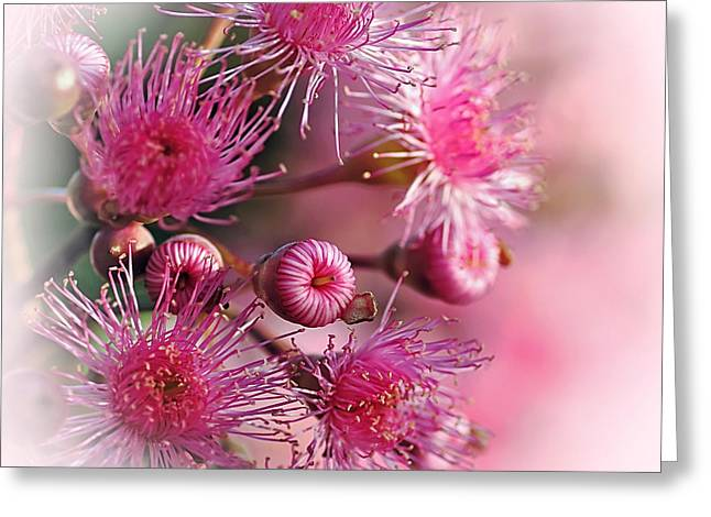 Delicate Buds And Blossoms Greeting Card by Kaye Menner