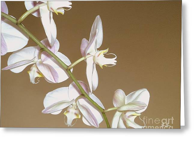 Greeting Card featuring the photograph Delicate Display by Geri Glavis