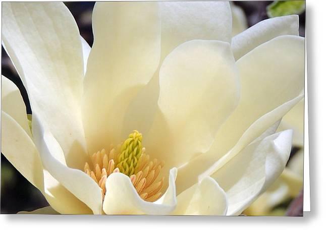 Delicate Flower Greeting Card by Teresa Schomig