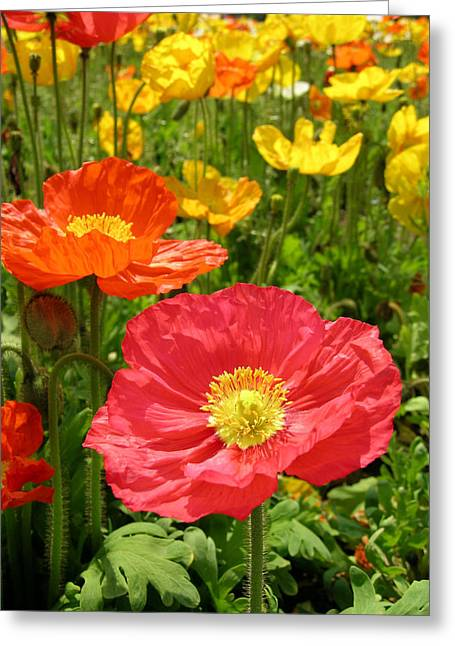 Delicate Fowers Greeting Card by Pat Knieff