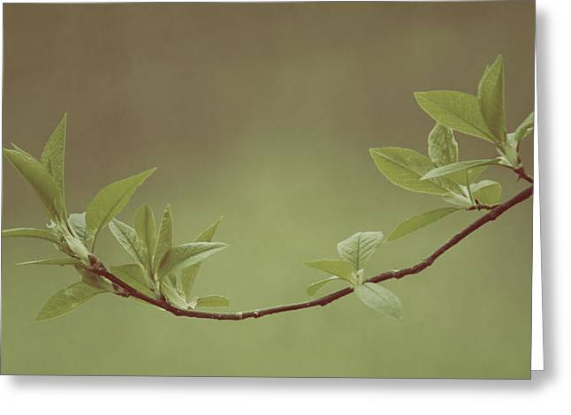 Delicate Leaves Greeting Card