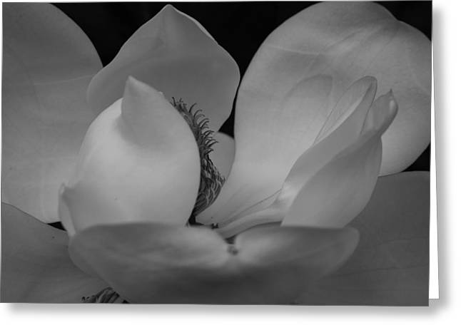 Delicate Magnolia Greeting Card