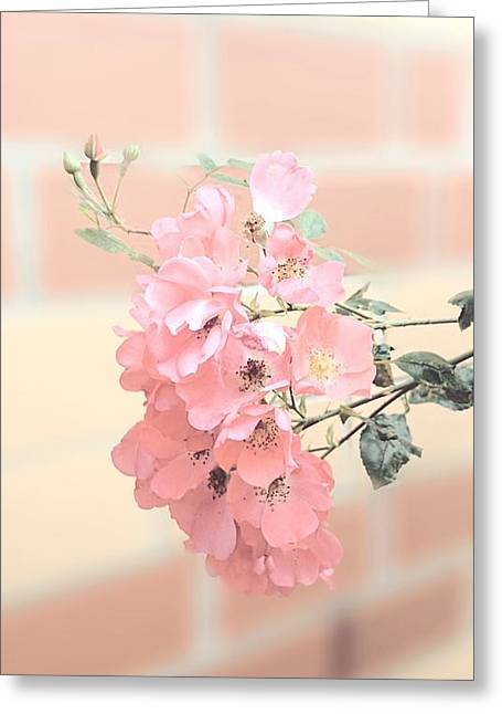 Delicate Pink 1 Greeting Card by Jacqueline Schreiber