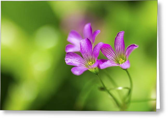 Delicate Purple Wildflowers Greeting Card