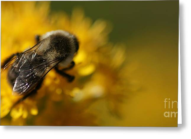 Greeting Card featuring the photograph Delicate Sensitivity by Linda Shafer