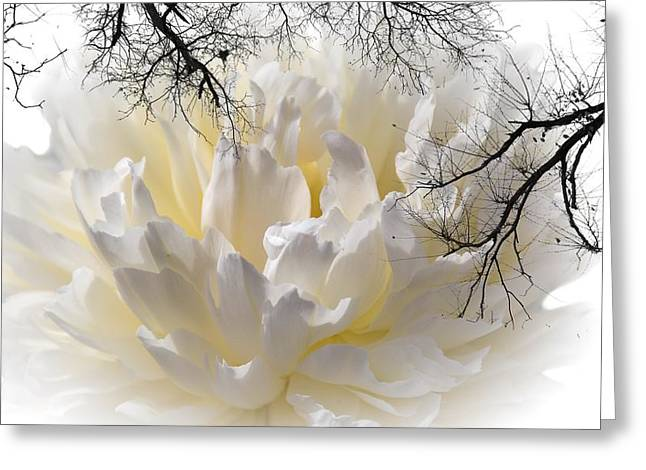 Delicate Greeting Card by Sherman Perry
