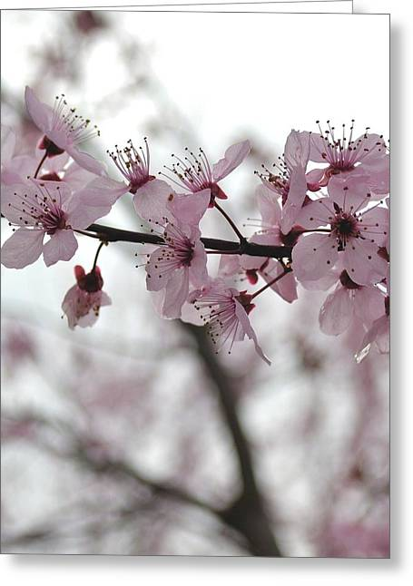 Delicate Spring Greeting Card by P S