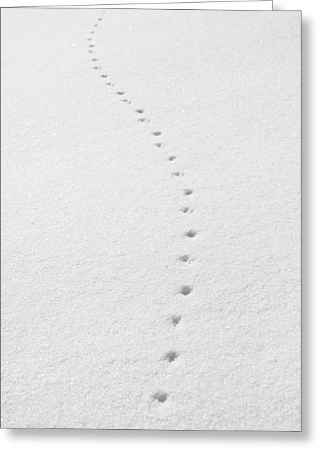 Delicate Tracks In The Snow Greeting Card