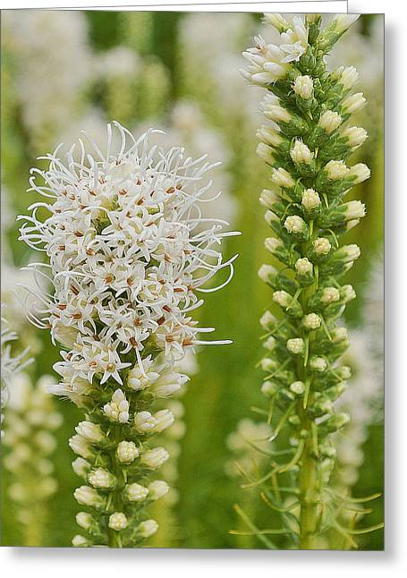Delicate White Greeting Card by Felicia Tica