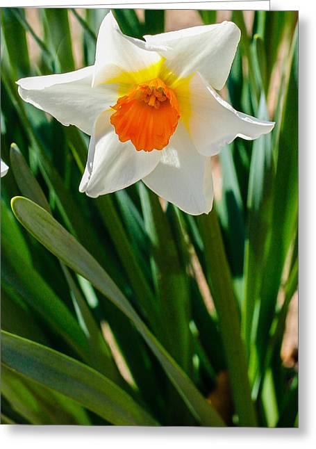Delicate White Flower Greeting Card by Robert Hebert