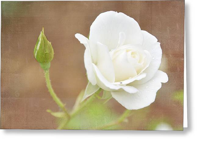 Delicate White Greeting Card by Jan Amiss Photography
