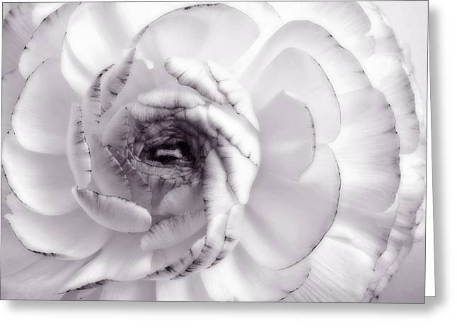 Delicate - White Rose Flower Photograph Greeting Card