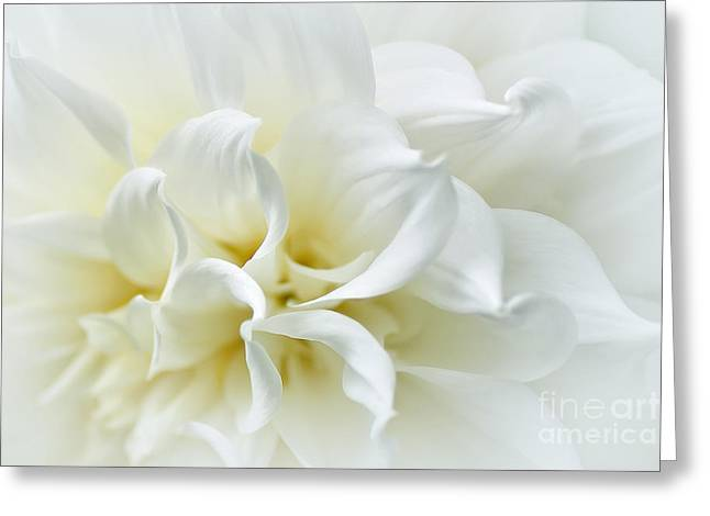 Delicate White Softness Greeting Card